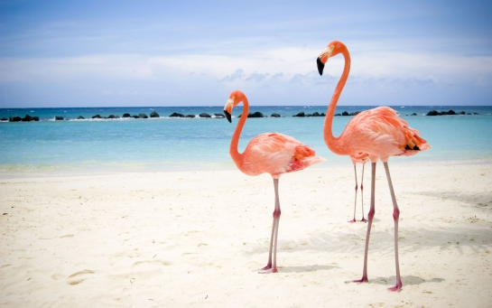 pink_flamingos_beach_wallpaper_-_1680x1050