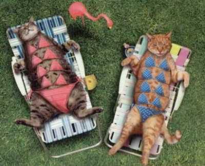 zonnebaden katten bikini